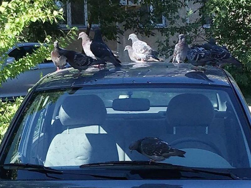 голуби сидят на машине