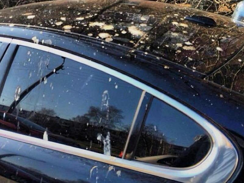 пернатые испачкали машину